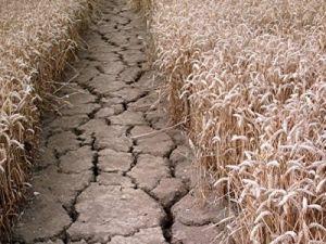 ФАО: производство продовольствия в Северной Корее под угрозой в результате худшей засухи с 2001 года