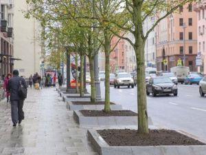Более более 2 тыс. деревьев высадят на Садовом кольце