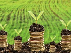 Благодаря системной поддержке АПК и сельских территорий российский агропром займёт лидирующие позиции в мире