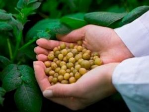 В Приморье создан Дальневосточный центр селекции и семеноводства картофеля