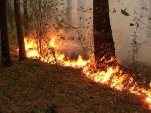 Пожар с жертвами в селе Курганской области