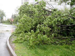 Москвичей ждёт сильный ветер до 22 часов: уже есть первые жертвы стихии