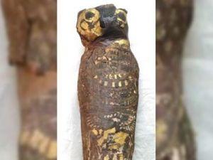 Древняя мумия сокола оказалась мумифицированным ребёнком
