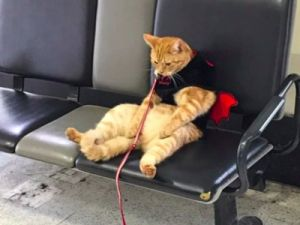 РЖД разрешит перевозить животных без сопровождения