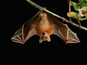 Moscow Zoo Took Overexposure Bats