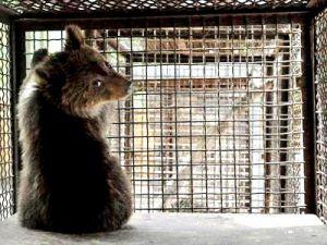 Госдума: в России запретят передвижные зоопарки и цирки