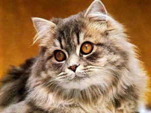 Кошки могут стать причиной развития шизофрении, считают учёные