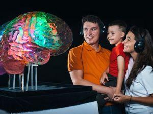 Женский мозг стареет медленнее мужского, считают учёные