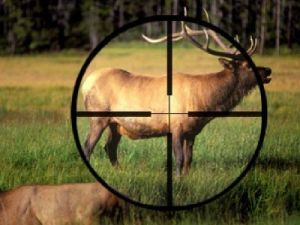 Responsibility for Poaching can be Toughen in Russia