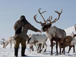 Kolyma Governor Bans Shooting Reindeer