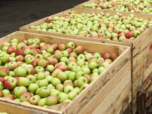 На границе выявлена новая схема нелегального ввоза фруктов из Белоруссии в Россию