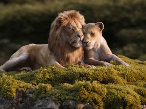 """The Premiere of the Disney Film """"The Lion King"""" Will Soon be on the Screens of Russia"""