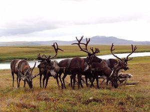 На исследования в Арктике ямальские власти выделят 5 млн рублей