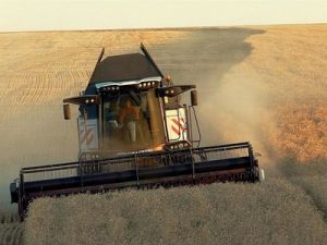 Crimean Agrarians Plan to Almost Double Supply of Grain to Syria