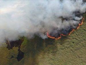 По мнению NASA, пожары в Сибири - крупнейшие за 10 тысяч лет