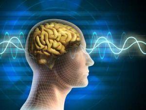 Врач назвал главный для мозга продукт