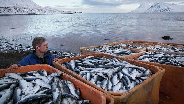 Казахстан не поддержал РФ в вопросе ограничения поставок норвежской рыбы