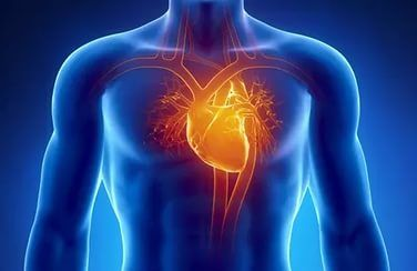 Сердце у мужчин и женщин стареет по-разному – исследование
