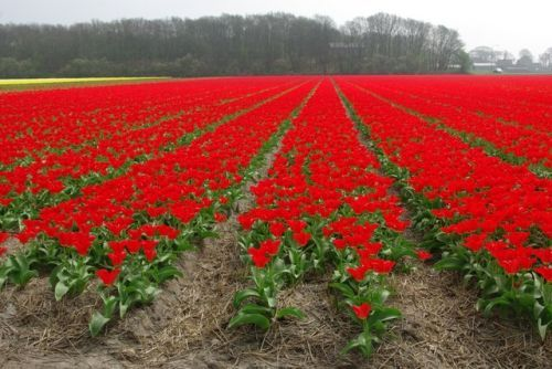 Россельхознадзор предложил создать собственную цветочную биржу