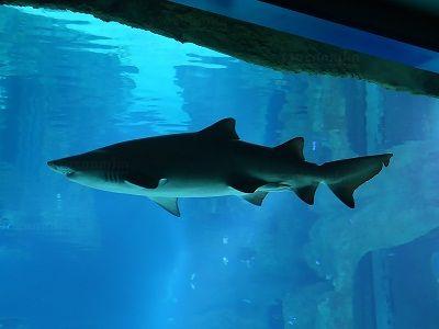 Неделя акул пройдёт в Московском зоопарке
