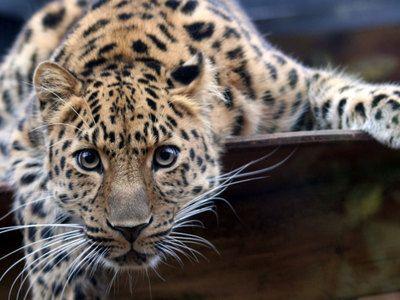 Московский зоопарк будет работать без выходных в новогодние праздники