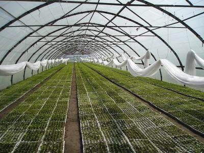 В Дагестане за минувший год введены в эксплуатацию тепличные комплексы площадью свыше 40 га