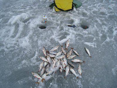 Приказом Минсельхоза актуализированы нормативы качества воды водных объектов рыбохозяйственного значения