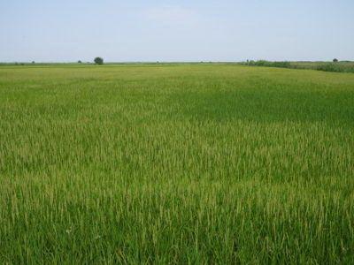 Томская область: за 2016 год инвестиции в сельском хозяйстве выросли в 2,3 раза