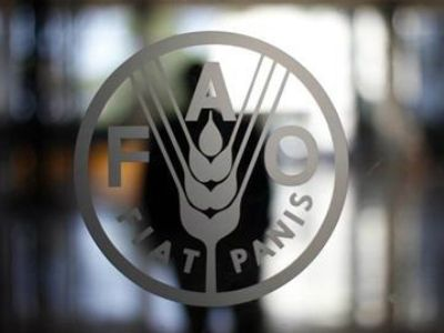 FAO urges more countries to join treaty against illegal fishing