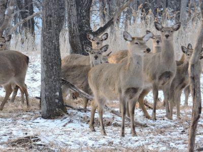 В Уссурийской тайге открылись столовые для диких животных