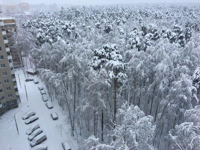 В первый день лета повеяло зимой. На Россию обрушился снегопад.