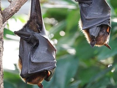 Пятая часть британских диких млекопитающих находится под угрозой вымирания