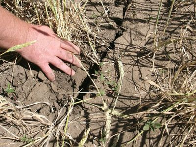 ООН собирается бороться с засухой