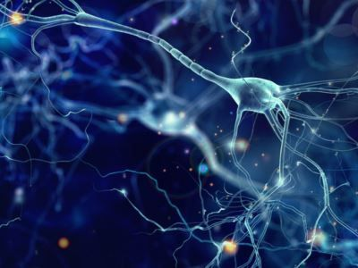 Учёные смогли перепрограммировать мозг