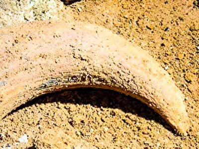 При строительстве трассы «Таврида» обнаружили останки мамонтов
