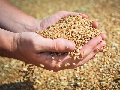 Grain Harvest In the Rostov Region Amounted to Almost 11 Million Tons