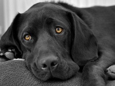 В Госдуме приняли законопроект об ответственном обращении с животными