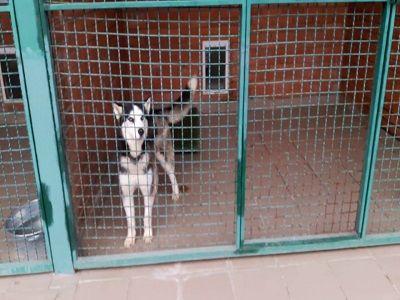 В Татарстане после убийства собак в приюте заведено уголовное дело