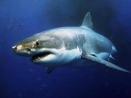 Акула помешала американскому рыбаку