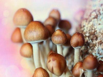 В США проведут референдум за декриминализацию галлюциногенных грибов