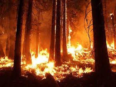 Из-за костра на Кузбассе выгорело 100 гектаров леса