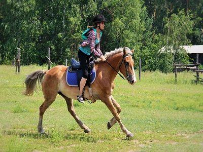 В Барнауле девочка впала в кому после нападения лошади