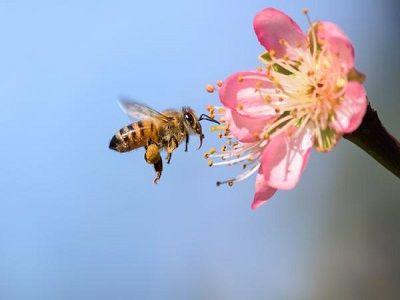 Ради спасения пчёл Британия откажется от газонов