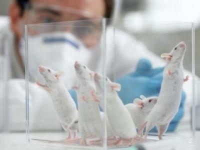 Эксперименты со стволовыми клетками помогли мышам вернуть обоняние
