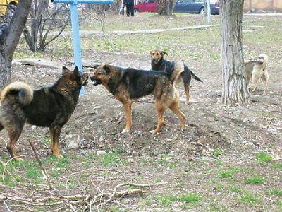 СК выясняет обстоятельства появления стай бродячих собак в Подмосковье