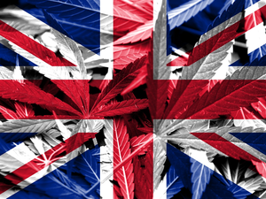 In the UK, it is Proposed to Legalize Marijuana to Increase the Country's Budget