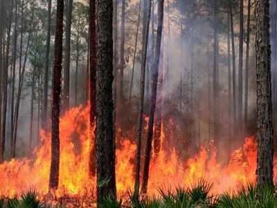 На Донбассе загорелся заминированный лес