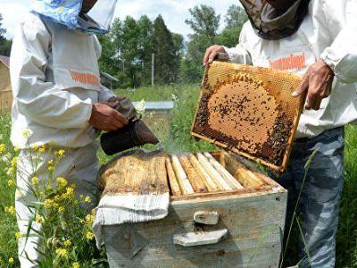 В Россельхознадзоре указали причины массовой гибели пчёл в российских регионах