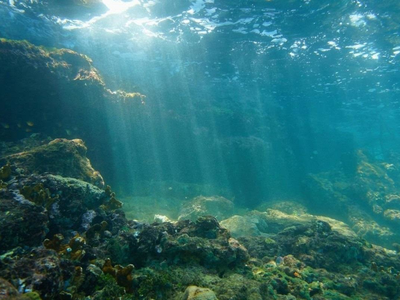 Ancient Sunken Forest Found Off the Coast of Lithuania
