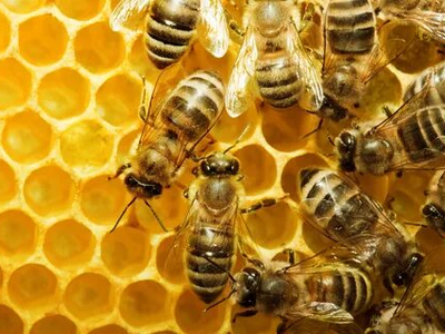 In the Oryol Region a Criminal Case on the Mass Death of Bees is Initiated